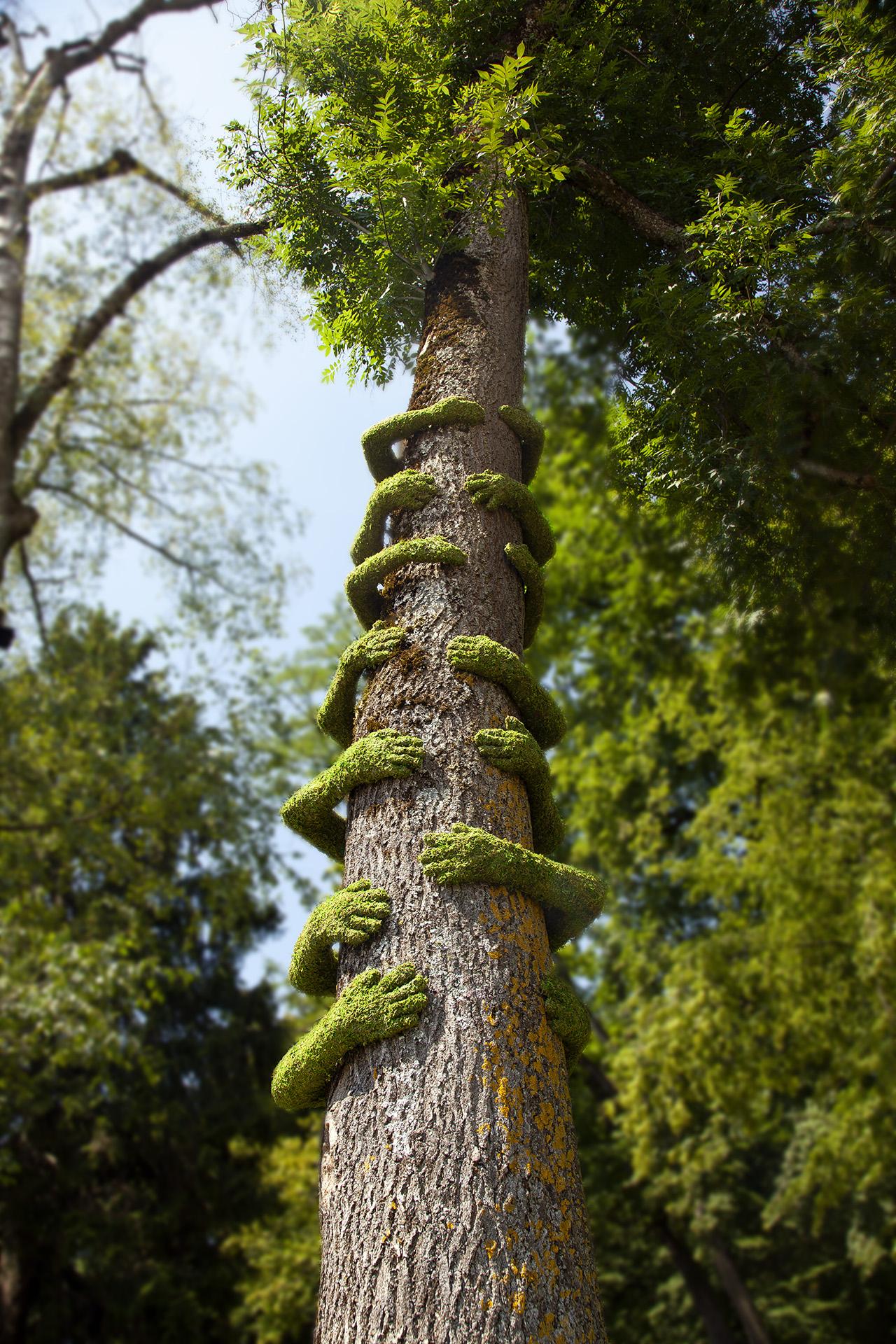 Tree Hug Annecy Monsieur Plant